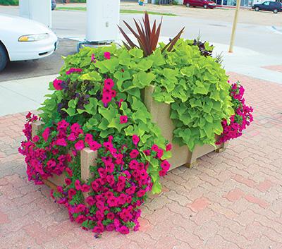 Castle self watering planter- location 2