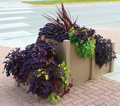 Castle self watering planter- location