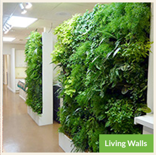Living Walls and Vertical Planters