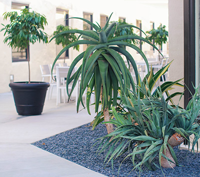 Plaza self watering planter - Loma Linda University