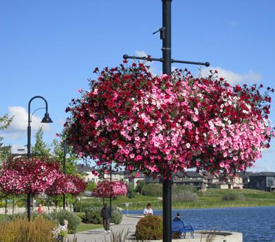 Pathway Self Watering Planter - Alberta
