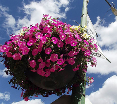 Pathway Self Watering Hanging Basket-mapple creek