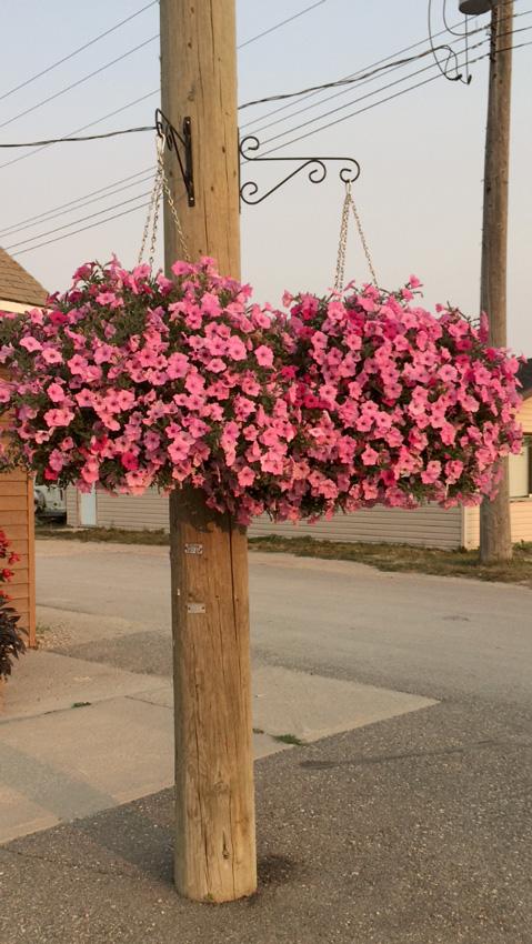 Municipal Hanging Flower Baskets : Pathway self watering hanging basket planter baldur