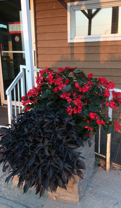 Municipal Hanging Flower Baskets : Sierra stone desert planters baldur flower committee