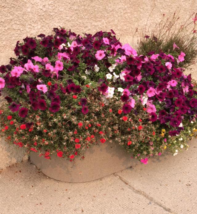 Municipal Hanging Flower Baskets : Baldur flower committee trio planter equinox desert planters