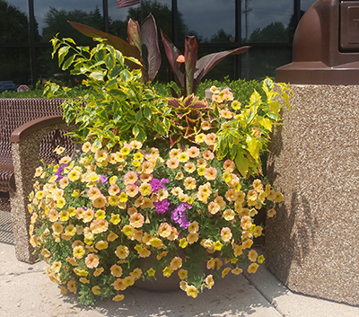 Gateway self watering planter town of Rakow with yellow flowers