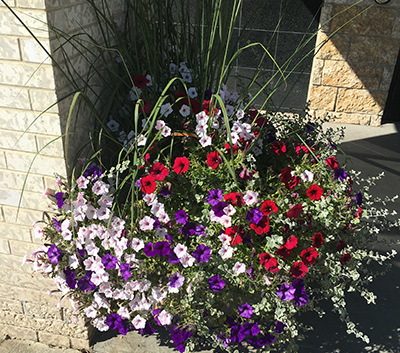 Gateway self watering planter in Coal Trail with beatiful flowers