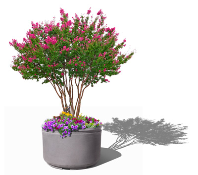 Windsor Self Watering Tree Planter - planted