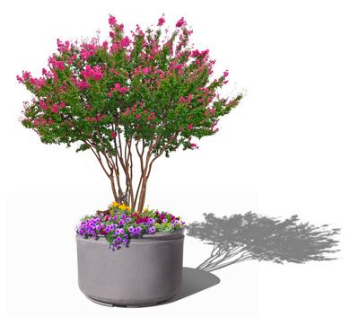 Windsor Self Watering Tree Planter - planted